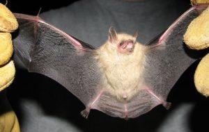 Pennsylvania T&E Species Expert